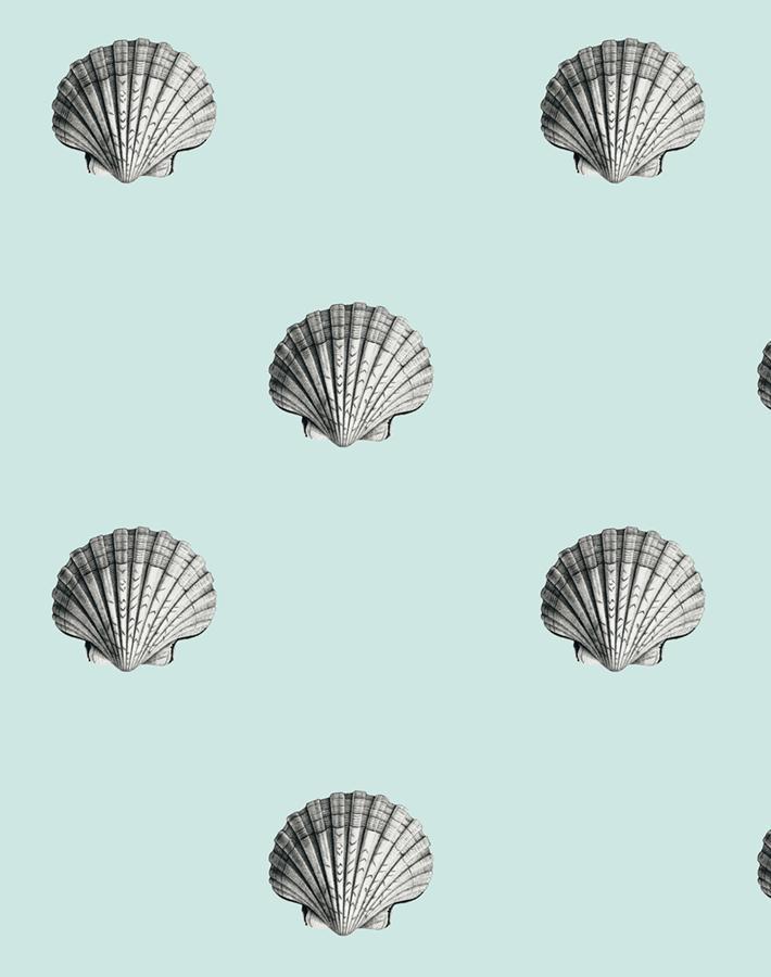 Seashell - Seafoam