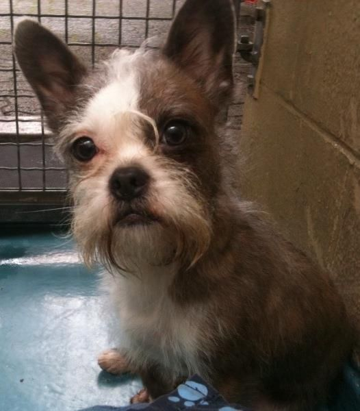 Vancouver B C Spca Animal Id 311599 This Little Man Was Found Wandering As A Sstray And Is Waiting For The Comfort Of A Ho Animals Natural Baby Lost Found