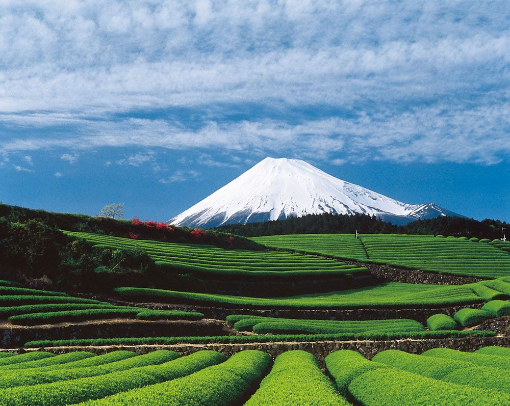 Mt.FUJI & Green Tea Farm #japan #shizuoka