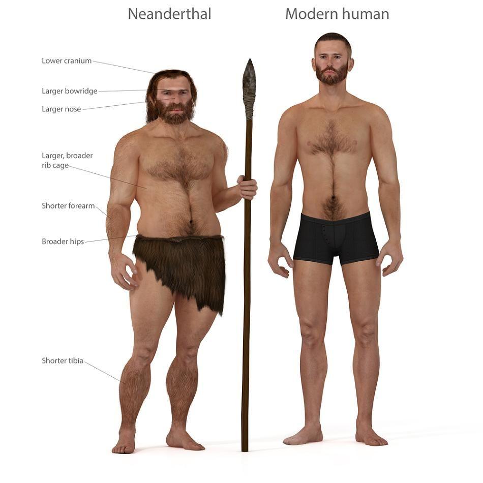 Neandertaler Vs Zeitgenosse Can You See Any Difference I Don T Neandertaler Der Moderne Mensch Mensch
