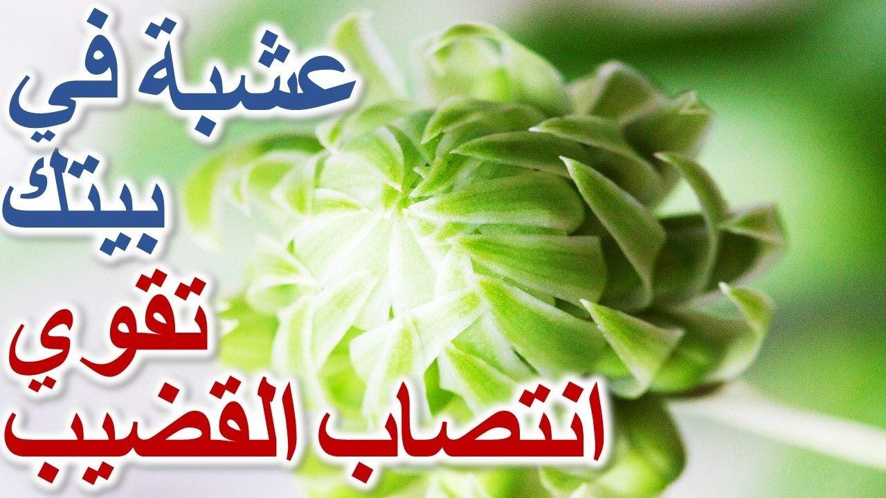 Pin On طب الاعشاب عند العرب