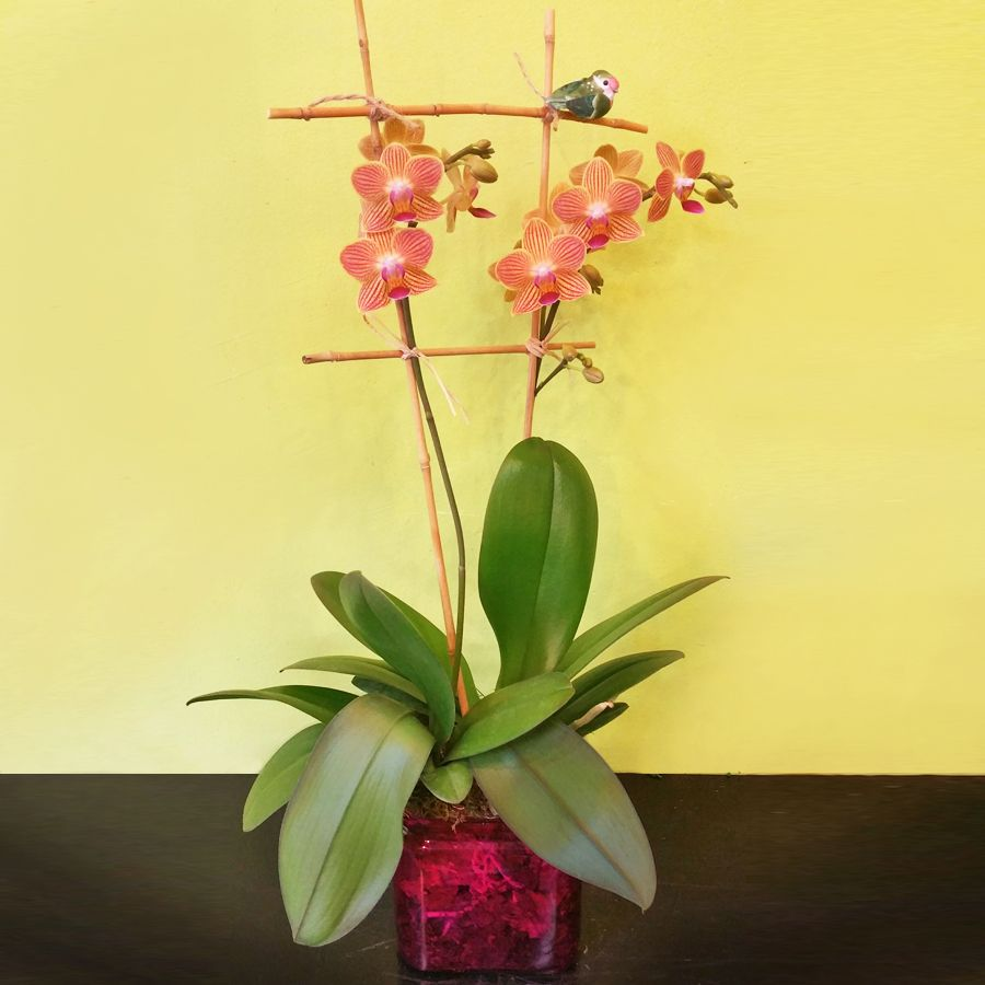 Meet You In The Park Phalaenopsis Orchid Arrangement Orchid Arrangements Orchids Phalaenopsis Orchid
