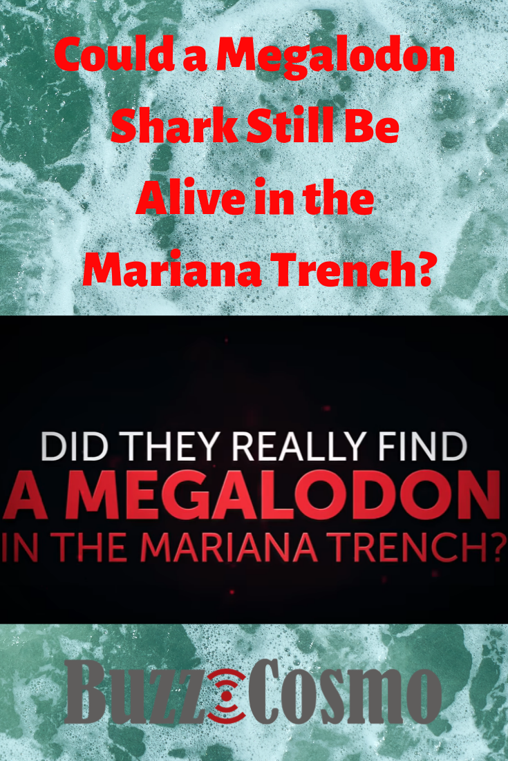 Could a Megalodon Shark Still Be Alive in the Mariana