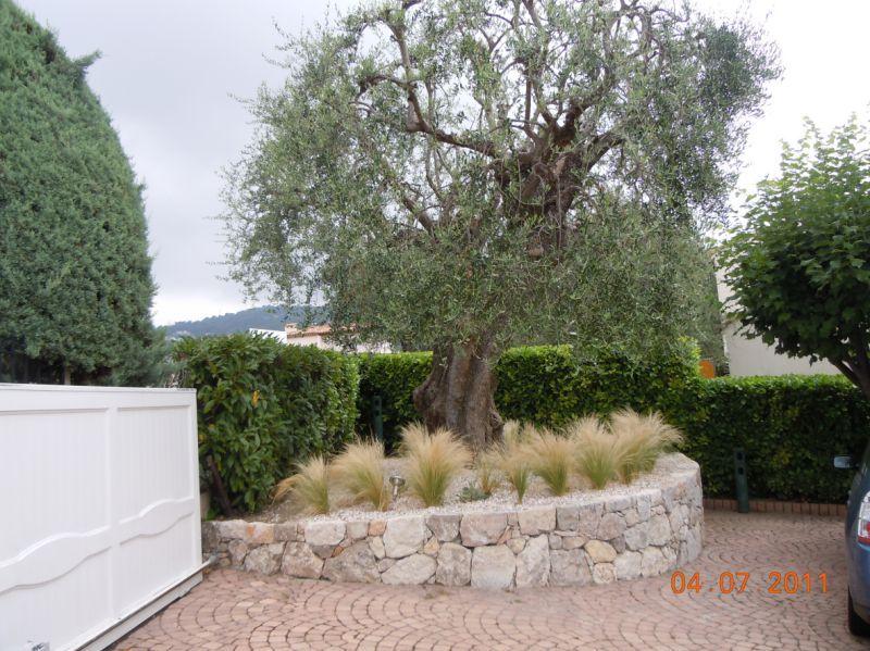 olivier et gramin es olivier pinterest gramin es olivier et plantation. Black Bedroom Furniture Sets. Home Design Ideas