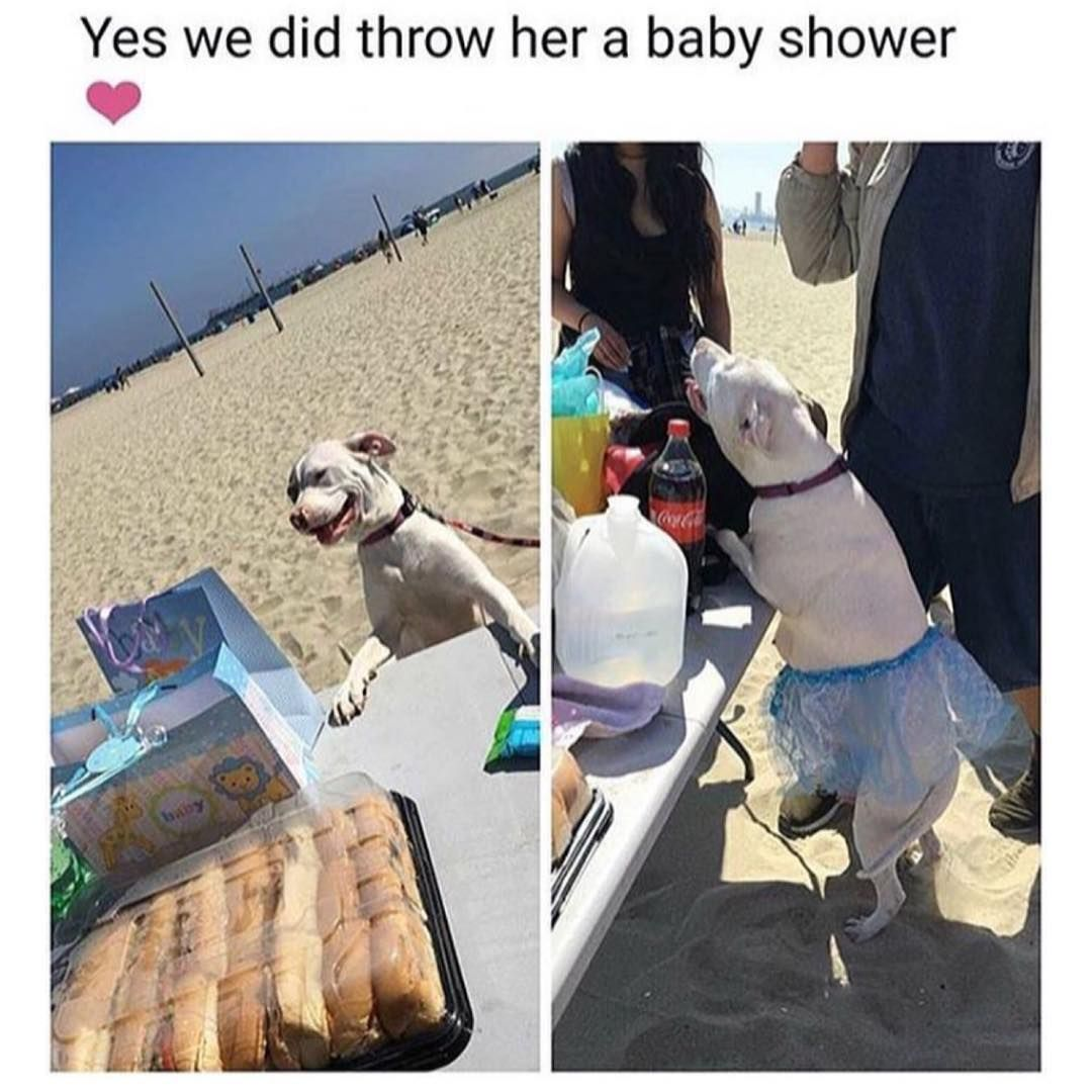 Yes We Did Throw Our Pregnant Dog A Baby Shower Fabulous Enjoy