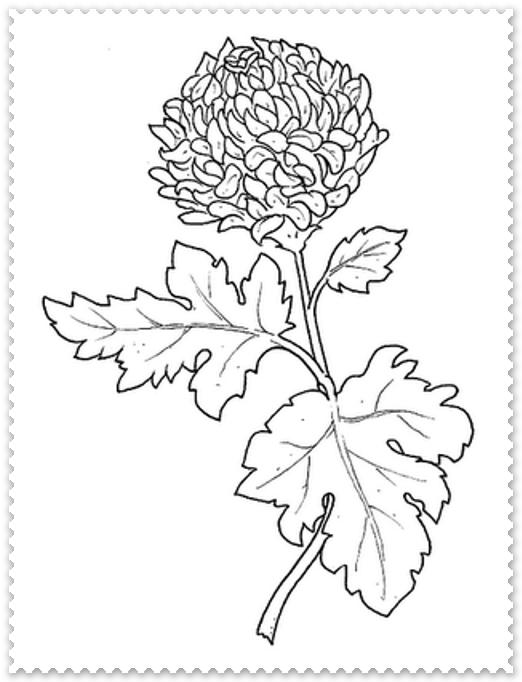 Planse De Colorat Crizanteme Planse De Colorat