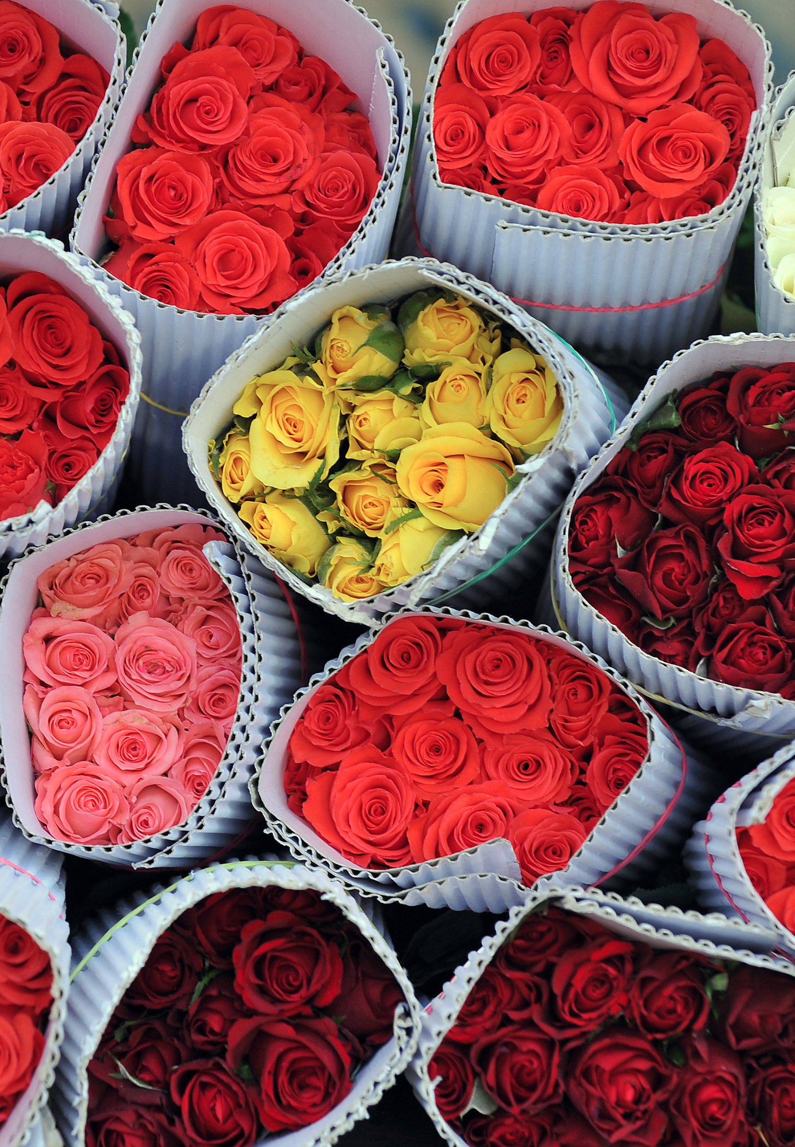 The Hidden Meaning Behind the Number of Roses in Your