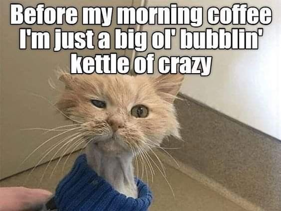 Pin By Tables By Design Llc On Coffee In 2020 Funny Cat Memes Funny Animal Memes Funny Animals