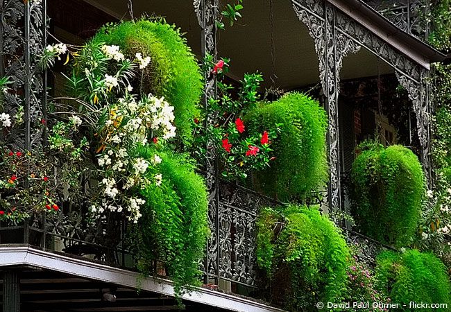 Bambus Sichtschutz auf Terrasse & Balkon   Bambusbörse Balkon ...