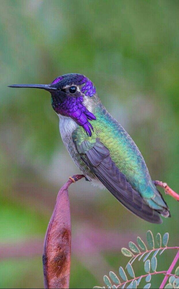 Colibri Sobre Una Flor Aves De Colores Colibri Fotos Fotos De Aves
