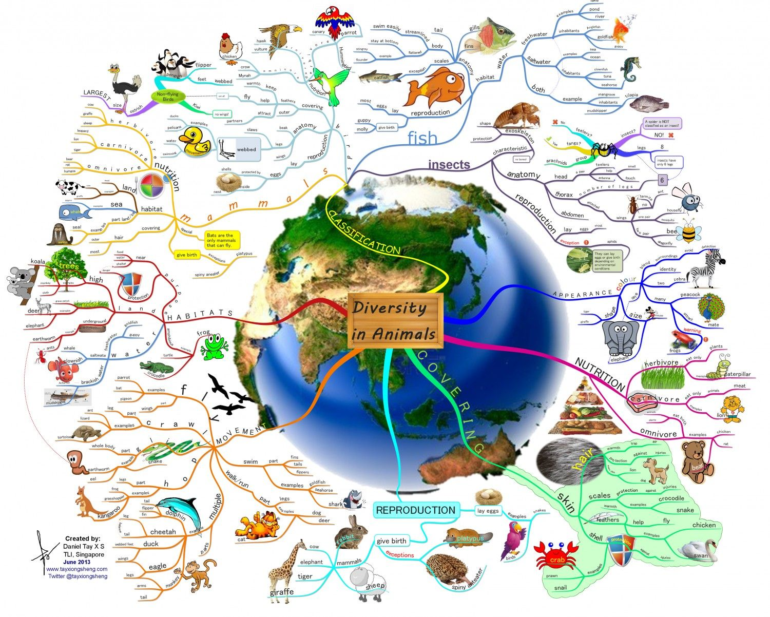 Diversity in Animals Infographic Mapas mentales y