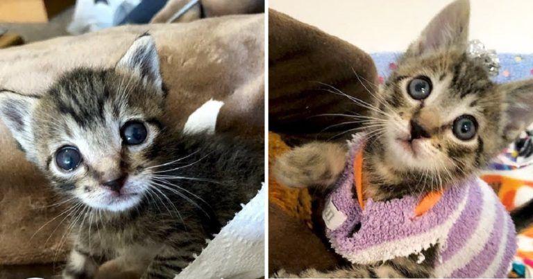 Cat Videos Kitten Rescue Kitten Kittens Cutest