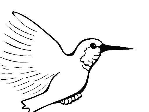 Dibujos de colibri para niños - Imagui | pinturas | Colibri, Colibri ...