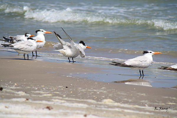 birds, sea, sand...