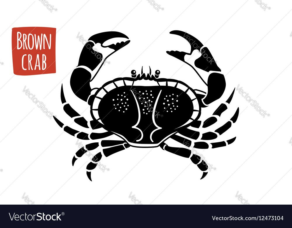Brown crab black and white vector image on black and