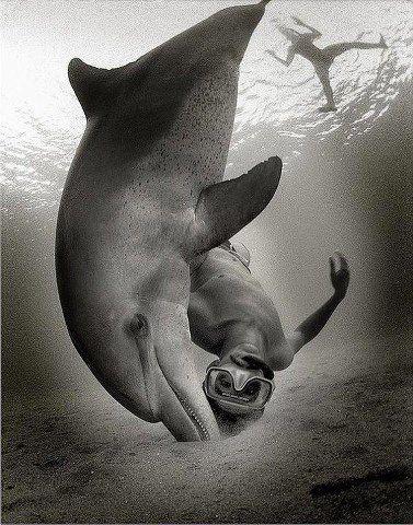 The dolphin family...  Wants YOU to be,  JOYFUL!!   Happy Aloha Friday Ocean Defenders
