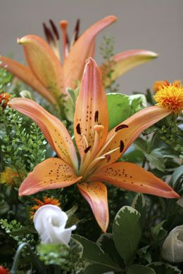 Meanings Of Stargazer Lilies What These Brilliant Flowers Symbolize Types Of Lilies Stargazer Lily Different Types Of Lilies