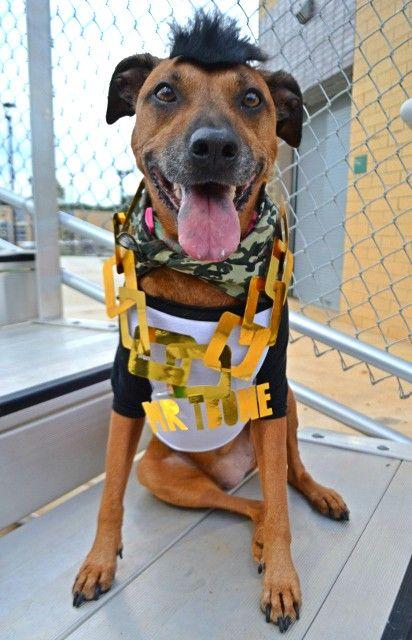 Mr T Bone Dogs Dog Costumes Costumes
