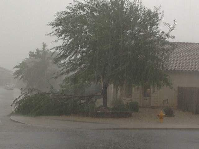 Chandler rain, August 26, 2013. Jackie Alvarado