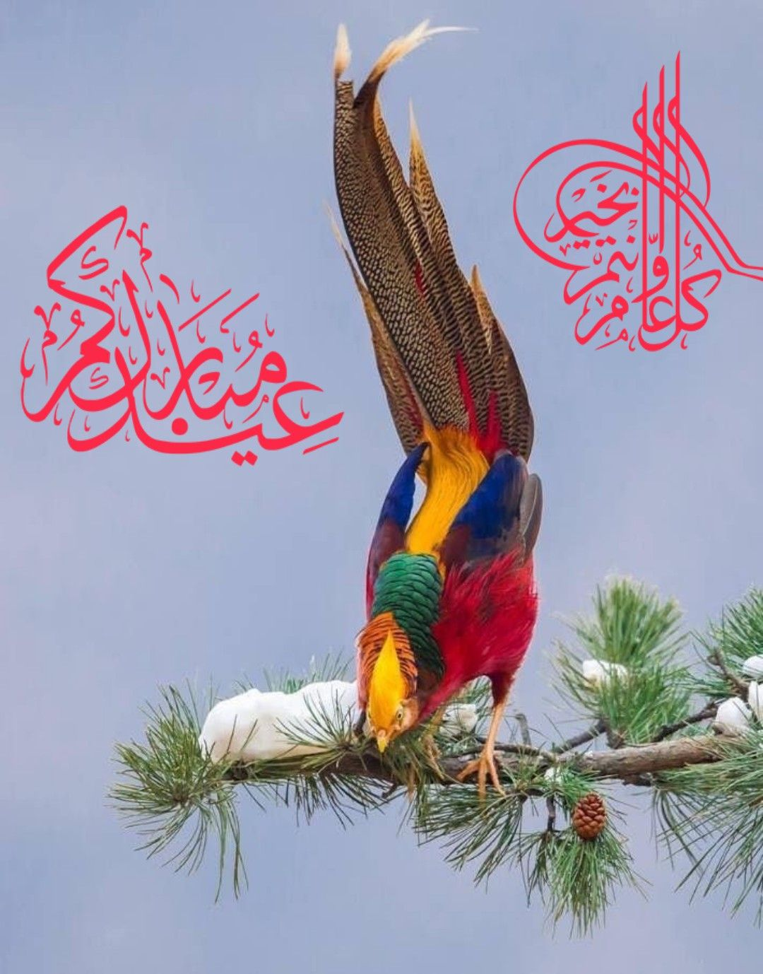 Pin By You Show On Quran Animals Bird Parrot