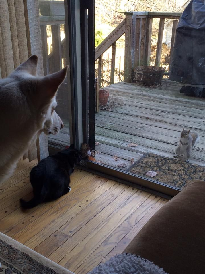 Image result for dog staring at squirrel