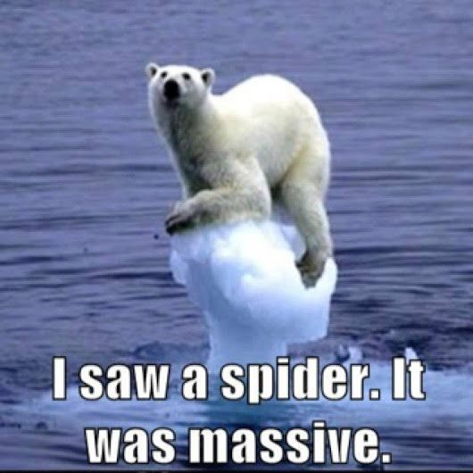 Funny Animal Pics 003 – Fit for Fun #animalcaptions
