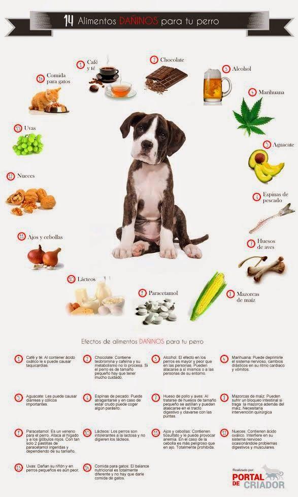 14 alimentos prohibidos para tu perro mascotas pinterest alimentos mascotas y perruno - Alimentos recomendados para perros ...