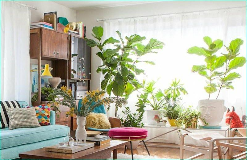 37 Cozy Living Room With Green Plants Living Room Plants