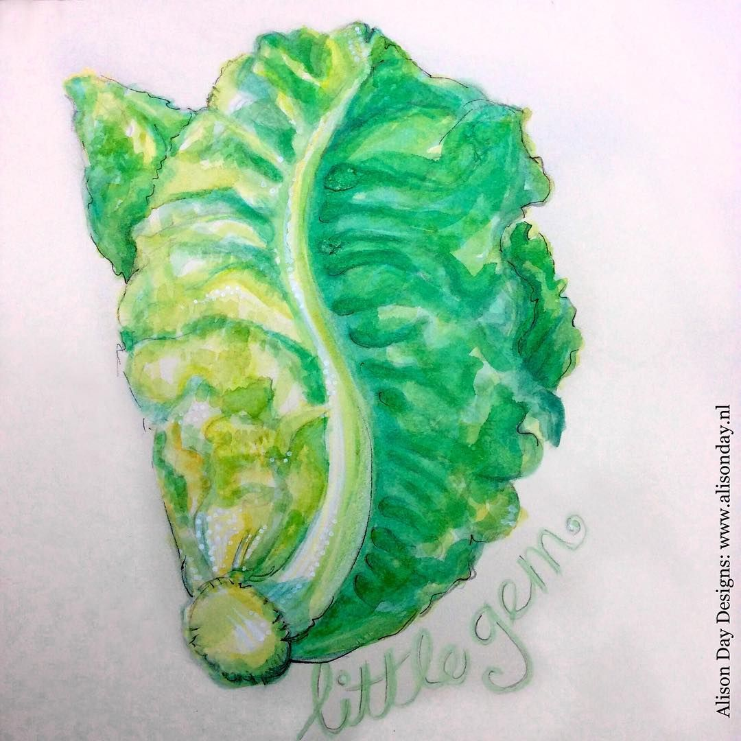Day 23/100 - #Lettuce by Alison Day       #100dayproject #100dayfoodanddrink #foodillustration #illustratingfood