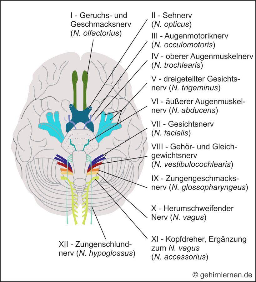 Ihr Portal für Gehirn und Lernen - für Schüler, Studenten, Eltern ...