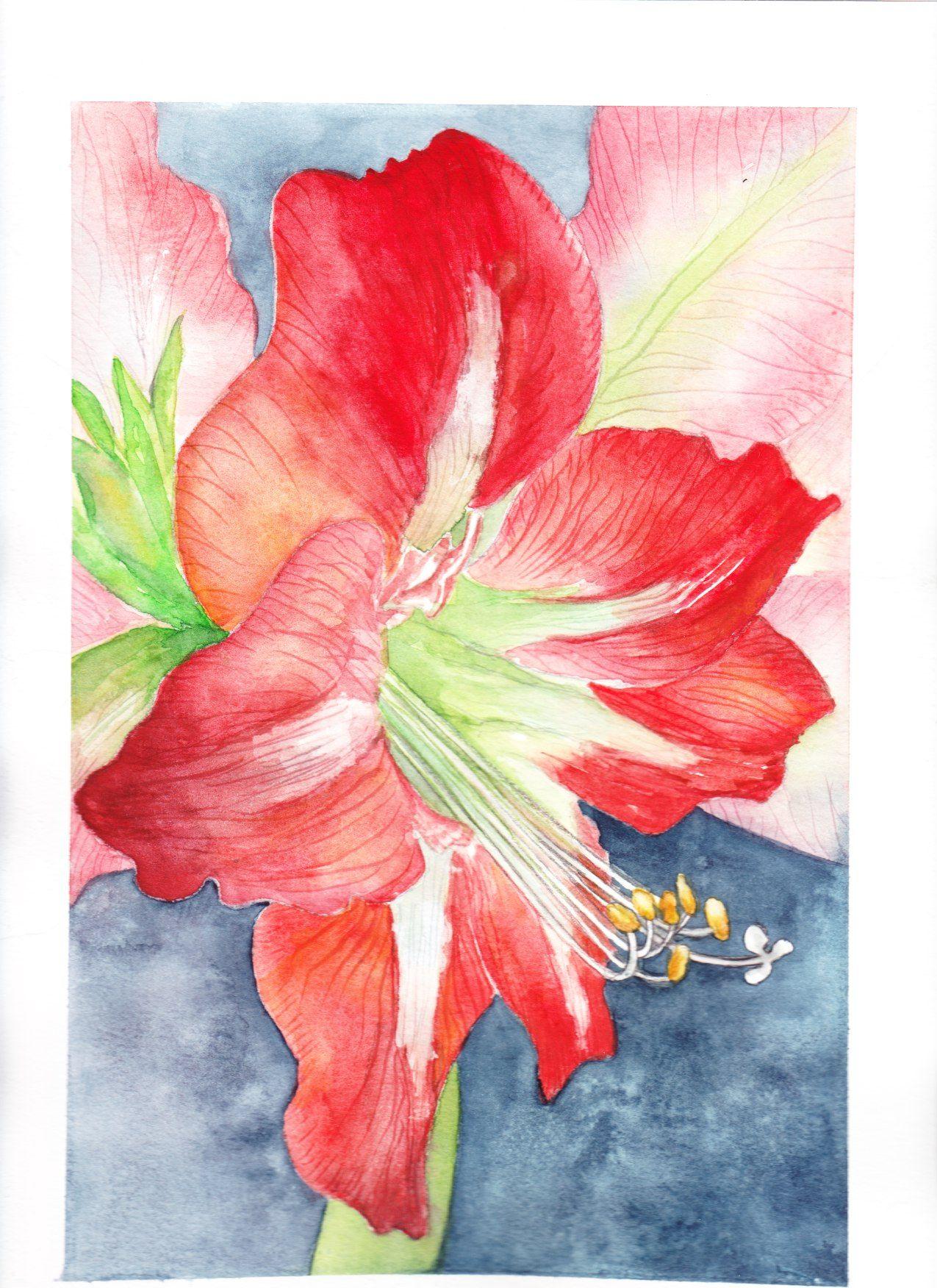Watercolor Card Christmas Amaryllis Christmas Art Watercolor