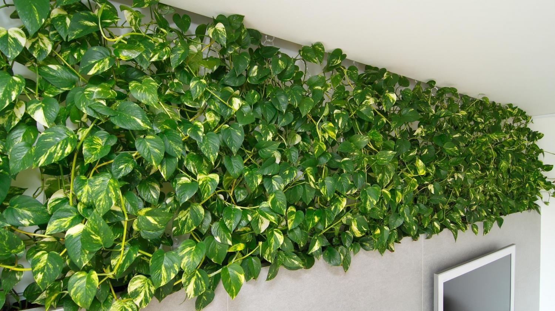 Zeleň ako súčasť interiéru   RULES architekti