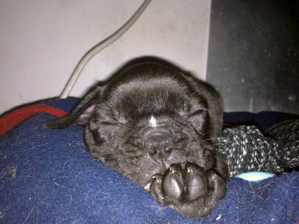 Eddy ( 3 months)