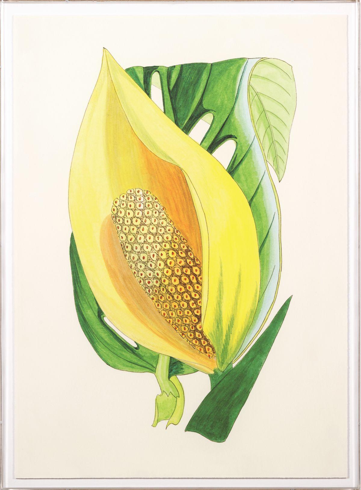 Elliottiana Lilies 1 | Natural Curiosities | Vintage Botanicals ...