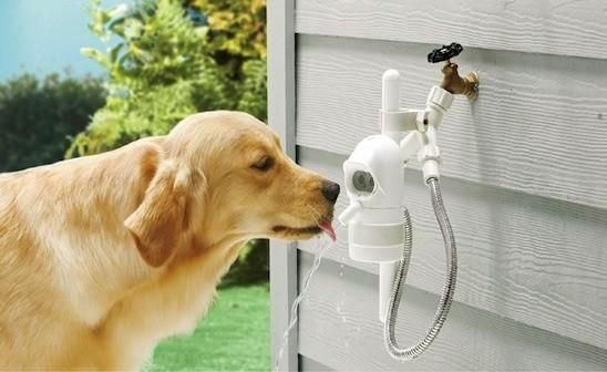 automatic outdoor pet fountain that immediately turns on when it senses your dog approaching. When the dog is finished drinking the fresh water and walks away, the fountain automatically turns off.