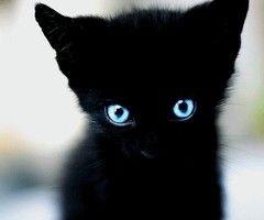 baby's got blue eyes..