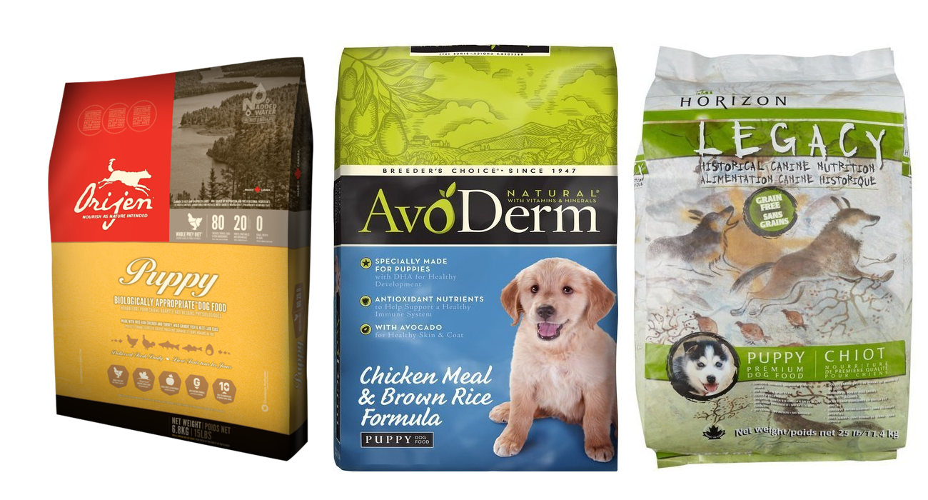 Dachshund Gallery With Images Best Dog Food Brands Top Dog