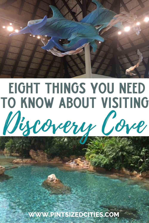 3ae4983c9bcbfb837b3f040859545bff - Is Busch Gardens Part Of Seaworld