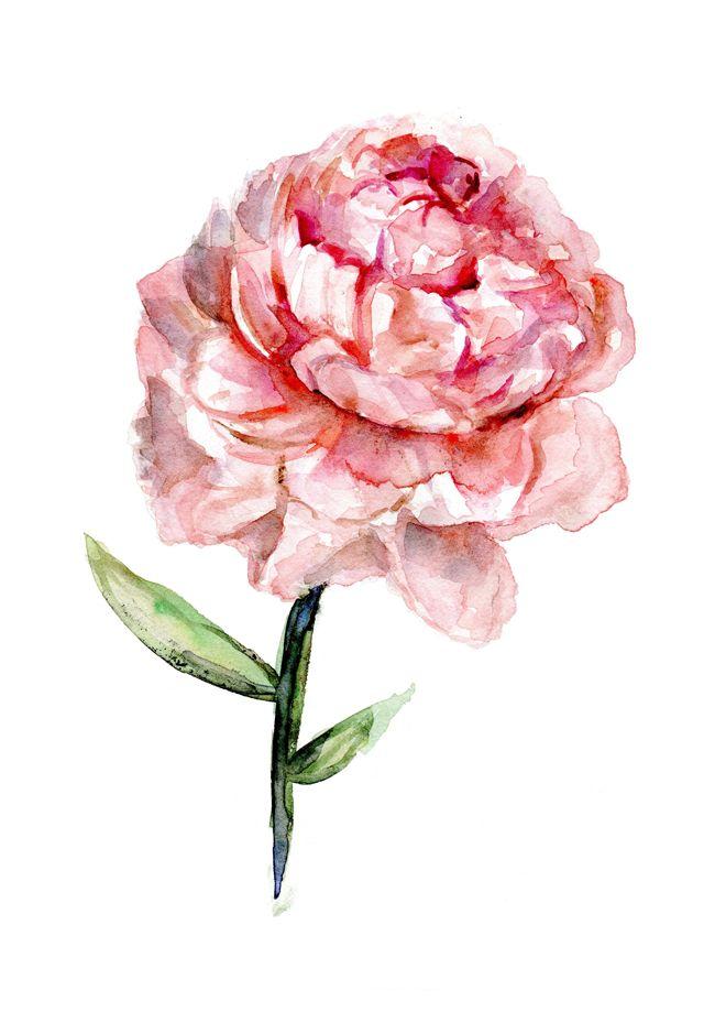 Custom Order of A Peony Rose Watercolor Painting | Zen ...