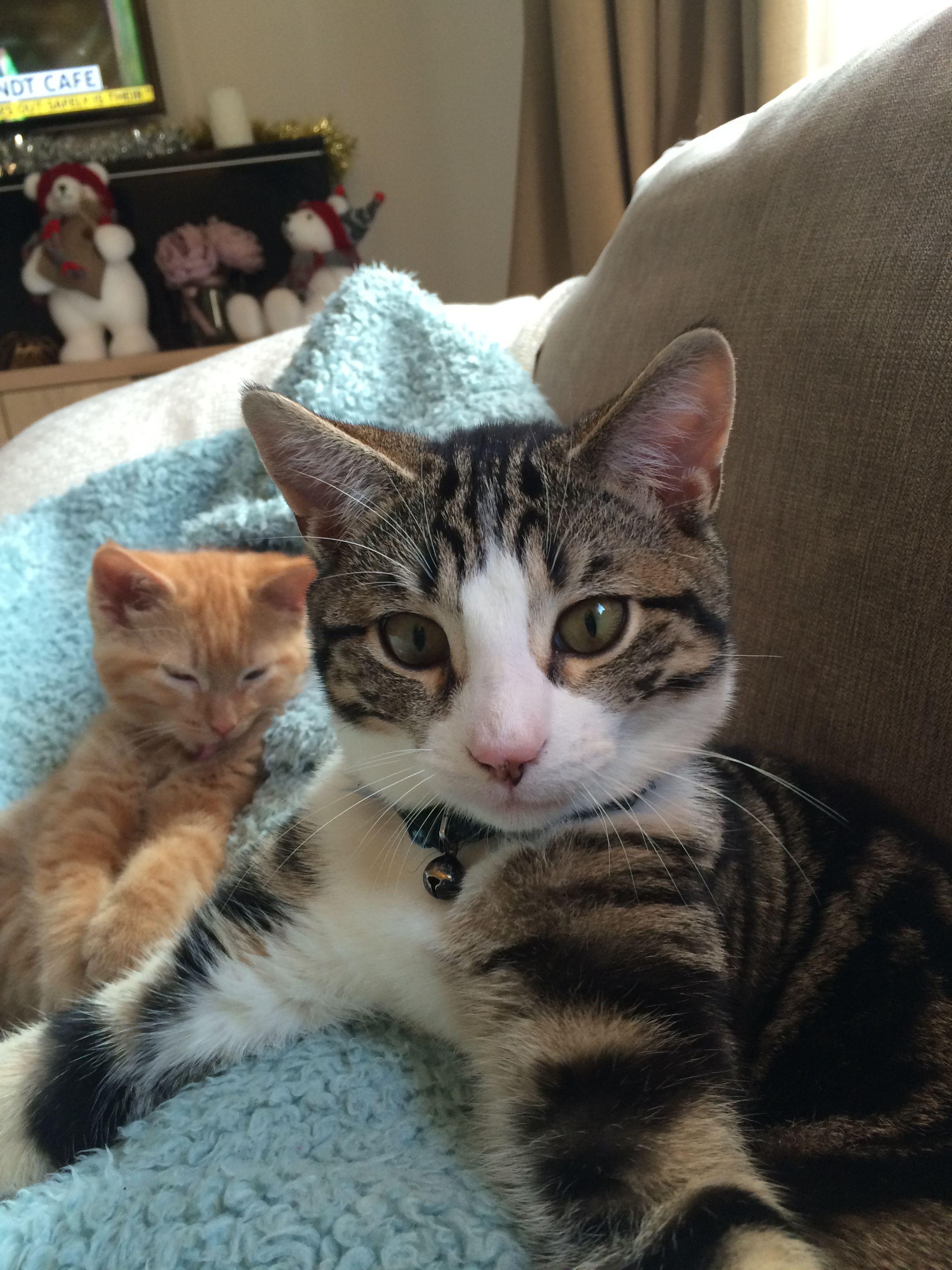 Pin By Maria Eduarda Aka Mary Yt On Pawshake Ireland Cats Cats Cat Boarding Kitty