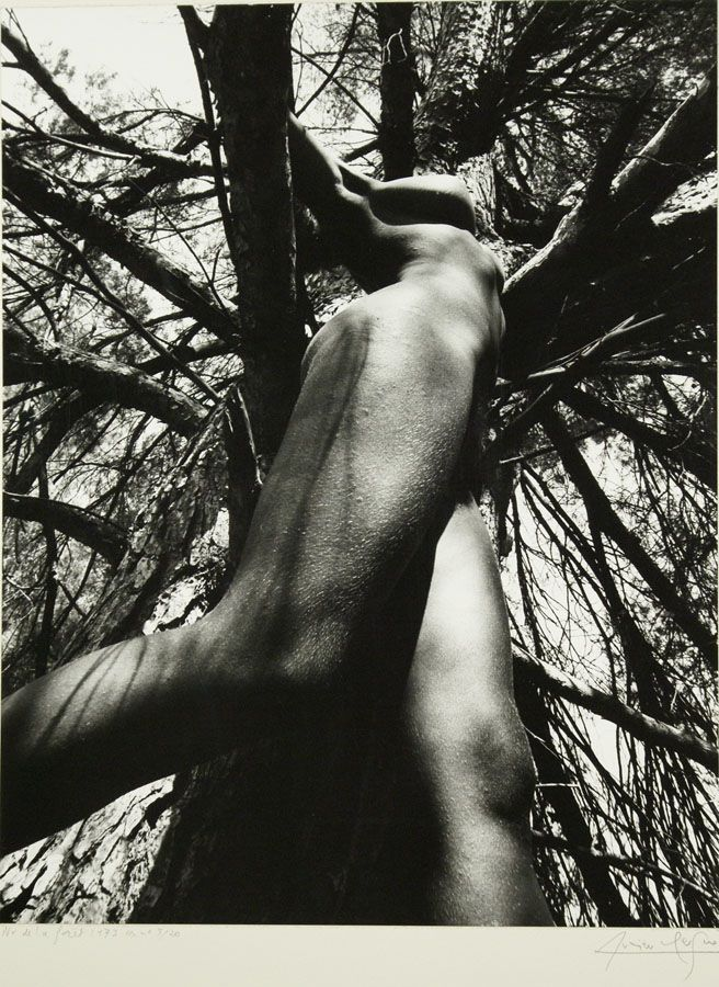 Image result for lucien clergue photo tree