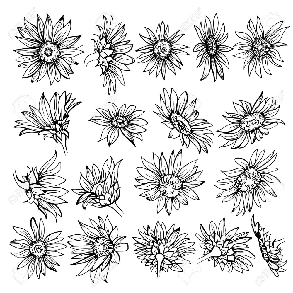 Hand drawn Sketch of blooms. Beautiful monochrome