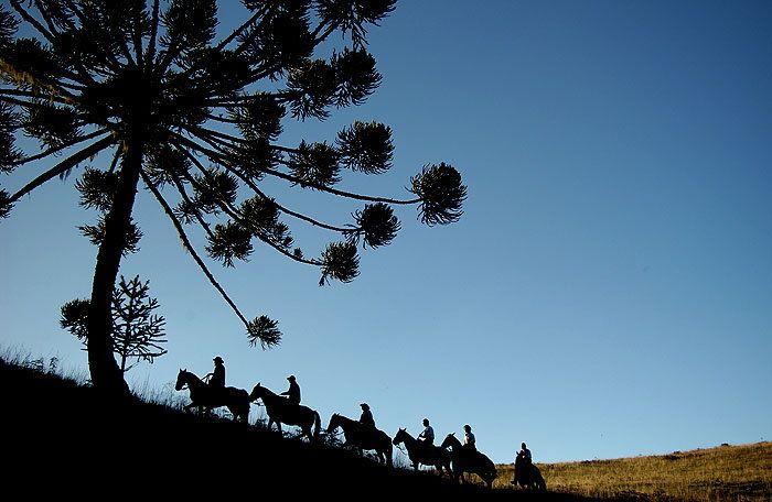 Into the landscape! Southern Brazil has beauties you can only discover on horseback. Participação ativa na paisagem - caminhos que só a cavalo se conhece! Campofora Viagens a Cavalo. ® Marcelo Curia