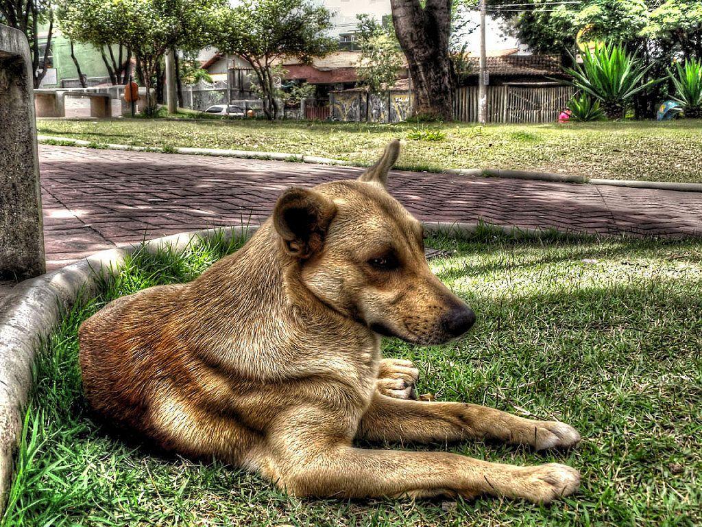 M Compartimos un remedio casero antipulgas para perros y gatos