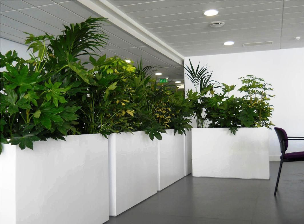 Superior Image Of: Large Indoor Planters
