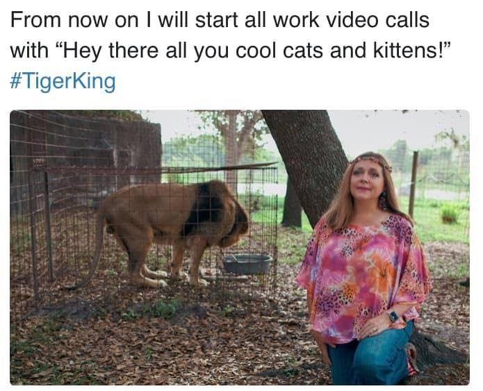 Best Tiger King Memes in 2020