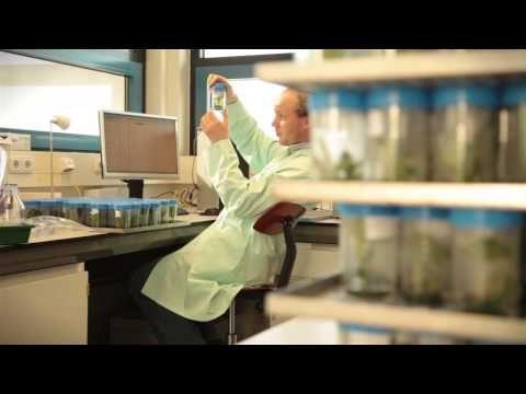 Een van de thema's waar Wageningen UR aan werkt is Voeding & Gezondheid. In dit filmpje wordt het onderzoek aan aardappel toegelicht. Onderzoek naar zetmeelproductie, resistentie tegen ziekten en de hoeveelheid residu van gewasbeschermingsmiddelen en de effecten ervan op de gezondheid.