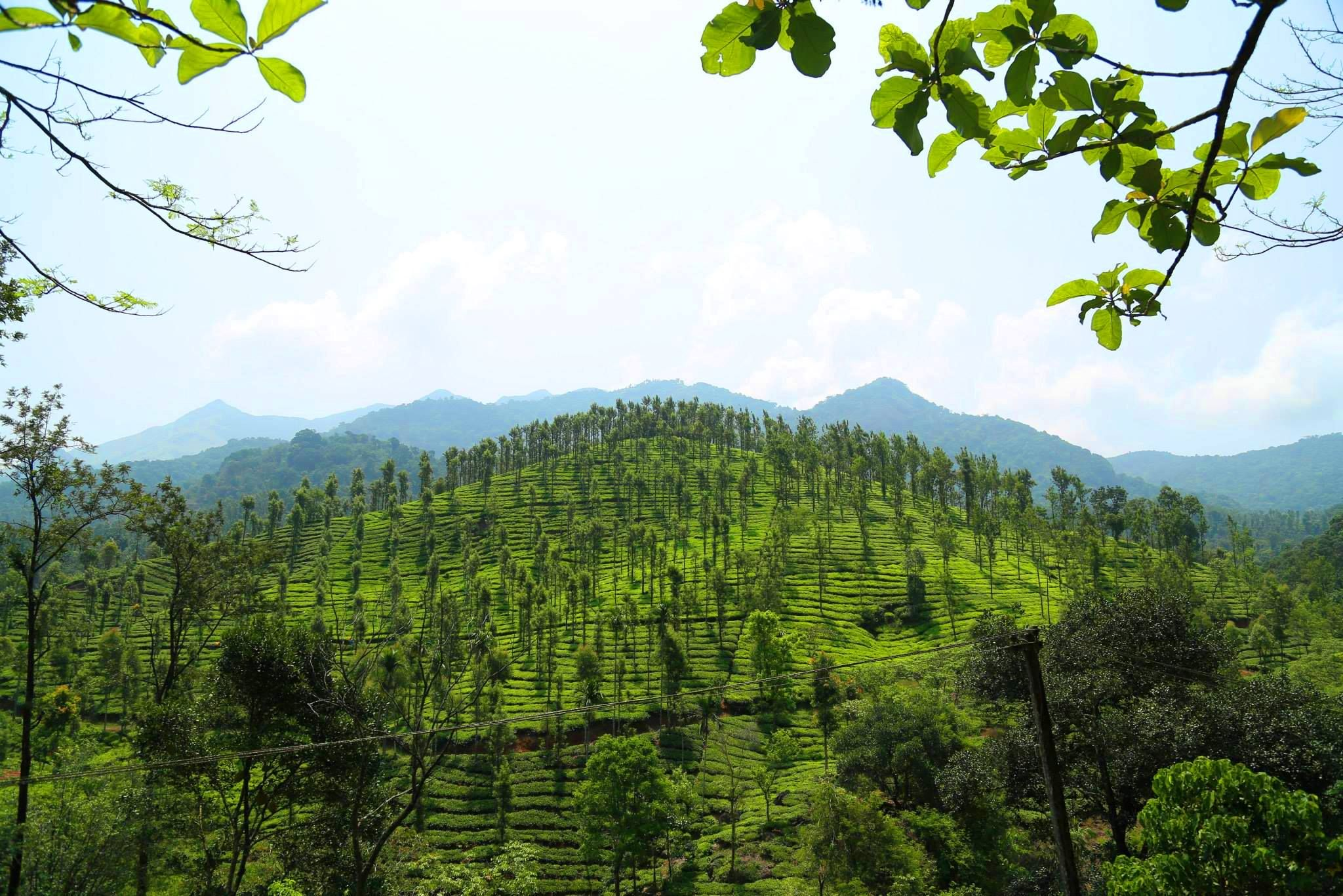Hills elegance, Kerala Best honeymoon resorts, Honeymoon