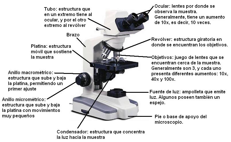 El Microscopio Con Sus Partes Y Funciones Buscar Con Google Fotos De Microscopio Microscopio Microscopio Optico