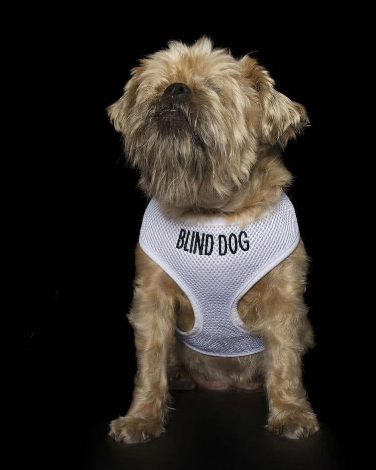 American Bulldog dog for Adoption in Perth Amboy, NJ. ADN